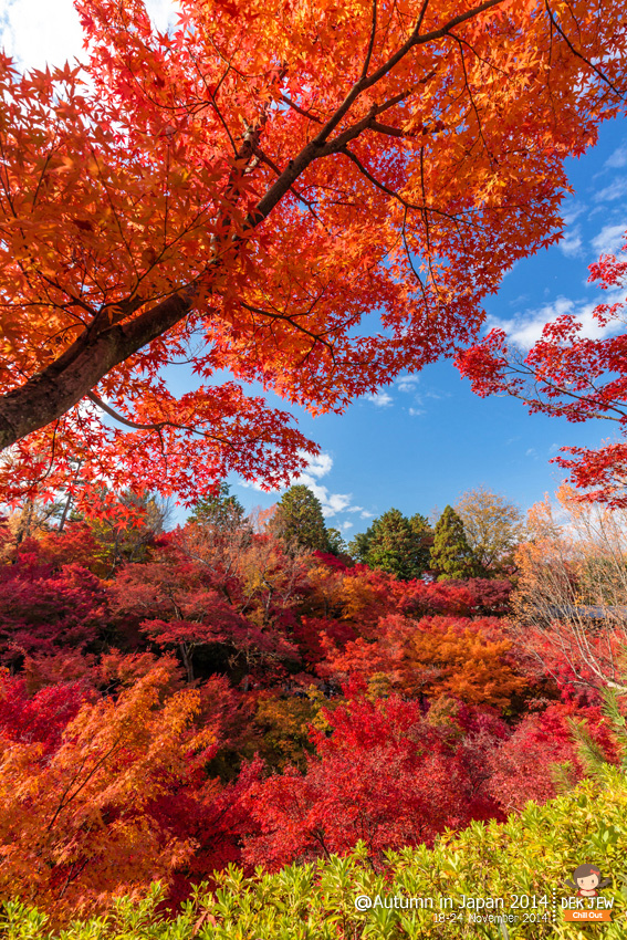 Autumn in Japan 2014
